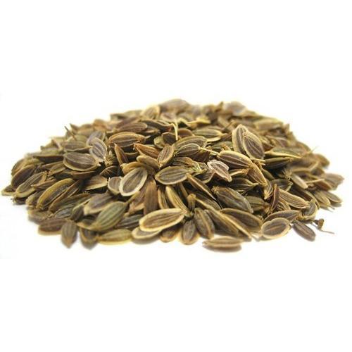 A007 Anethum Graveolens Botanical Seeds_2