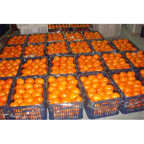 Fresh Oranges_3