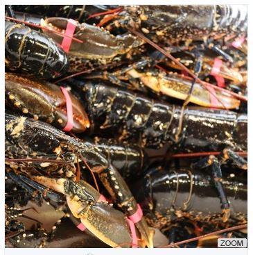 Lobster - Nephropidae_2
