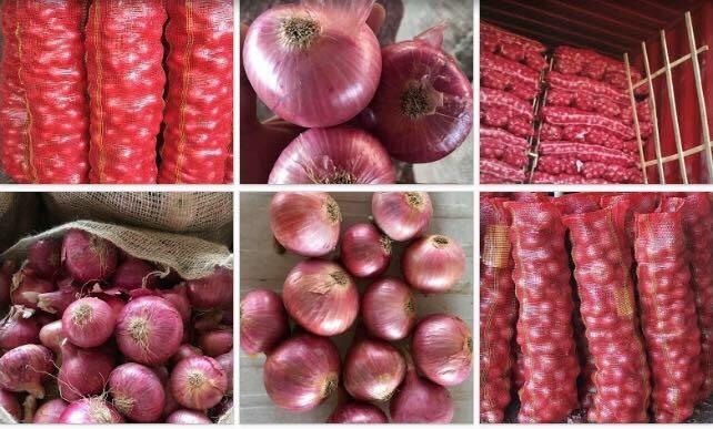Fresh Onion_4