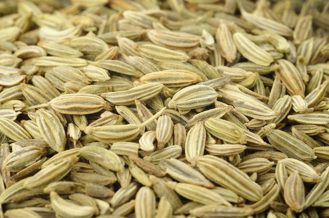 Fennel whole_2