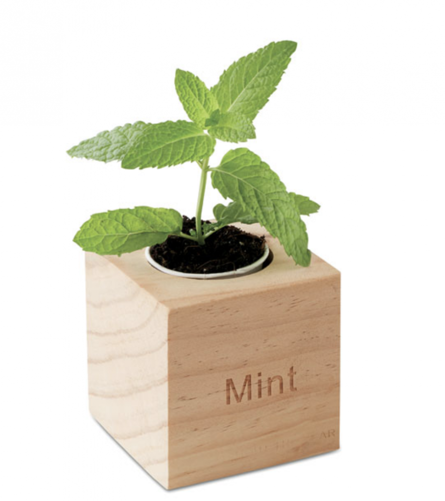Herb Pot in Wooden Case_2