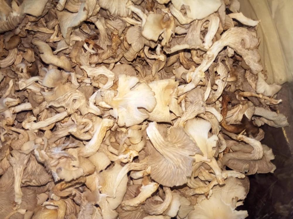 Dry Oysters Mushroom_5