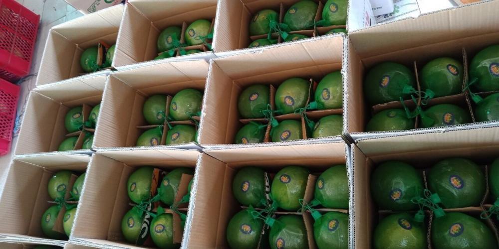 VietNam Fresh Pomelo Fruit_5