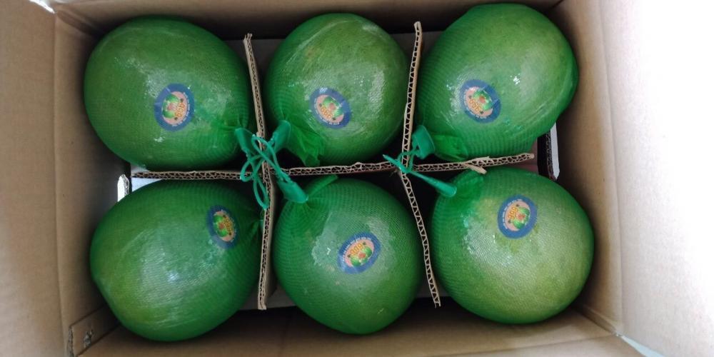 VietNam Fresh Pomelo Fruit_6