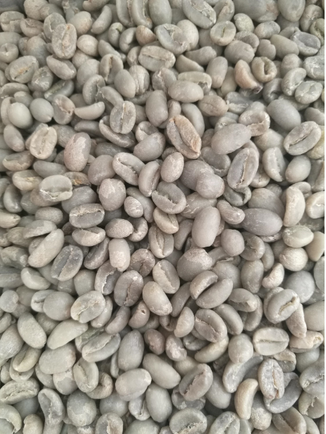 Arabica Green Coffee Beans_2