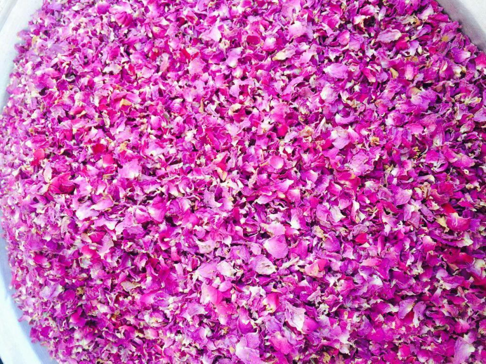 Rose Buds and Petals_3