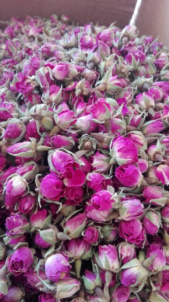 Rose Buds and Petals_2