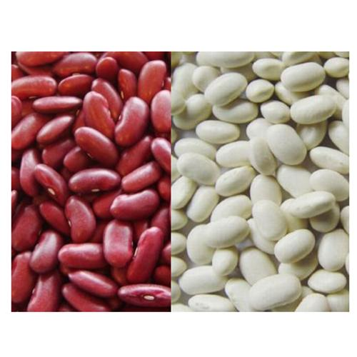 Red & White Kidney Beans_2