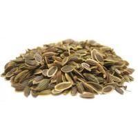 A007 anethum graveolens botanical seeds