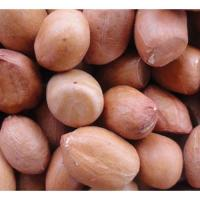 BHAGWATI SEEDS 24/28 GROUNDNUT IN SHELL
