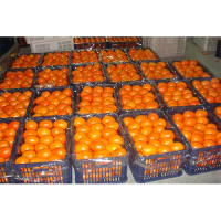 Fresh Oranges_3