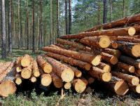 Logs - Other species