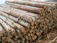 Eucalyptus dowel broom stick-mop stick- mop dowel