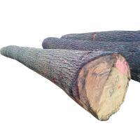 European beech peeling logs