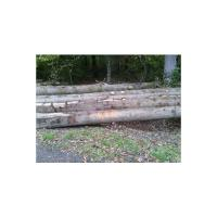 European white oak logs – BB/C(ABC-) grade