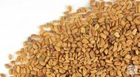 Organically cultivated - Fenugreek_2