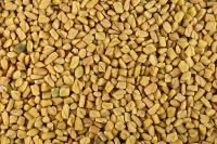 Organically cultivated - Fenugreek_4