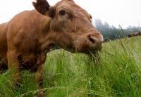 Best Grass FedBeef Jerky_5