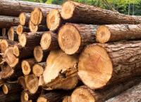 Logs product