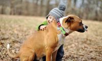 Pet tracker_5