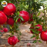 Fresh pomegranate_6