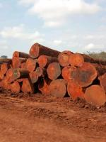 Timber wood logs  lumber for sale