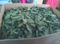 Dried Molokhya