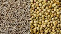 Best spices exporter in India