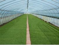 PE greenhouse plastic film