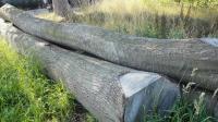 Logs-Red Oak