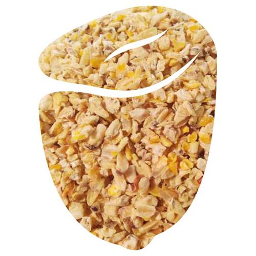 Grain span corn germ
