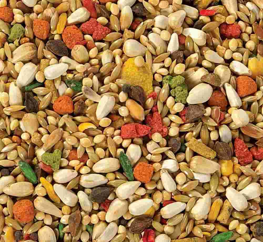 Seeds_2