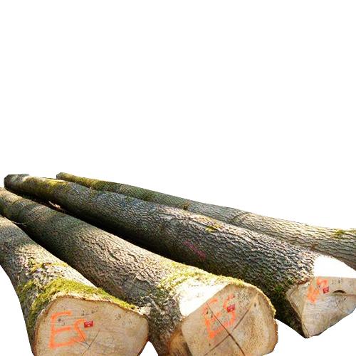 European Ash Logs Sawing – AB grade_2