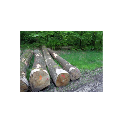 European beech sawing logs – BC grade_2
