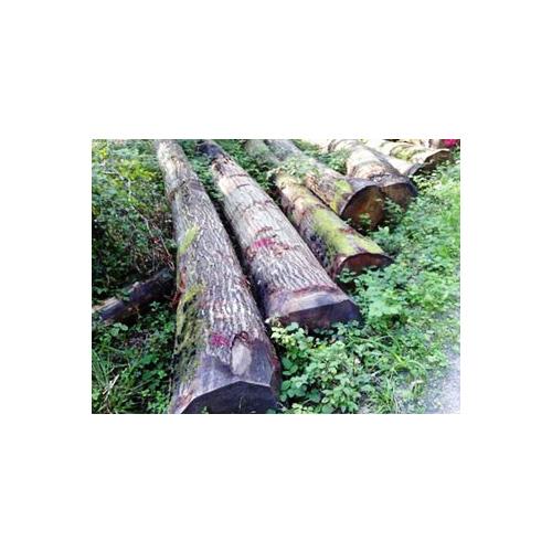 European red oak logs – ABC grade_2