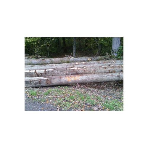 European white oak logs – BB/C(ABC-) grade_2