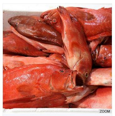 Butter Fish