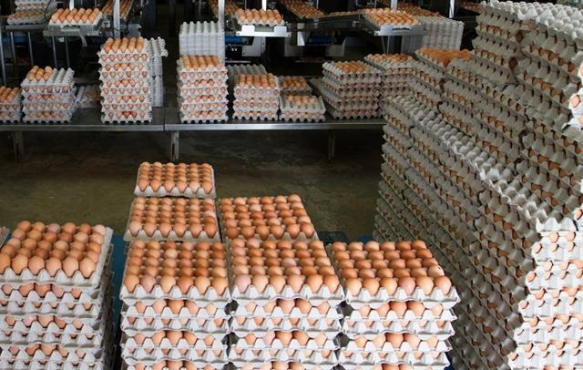 Fresh brown table eggs chicken eggs in bulk