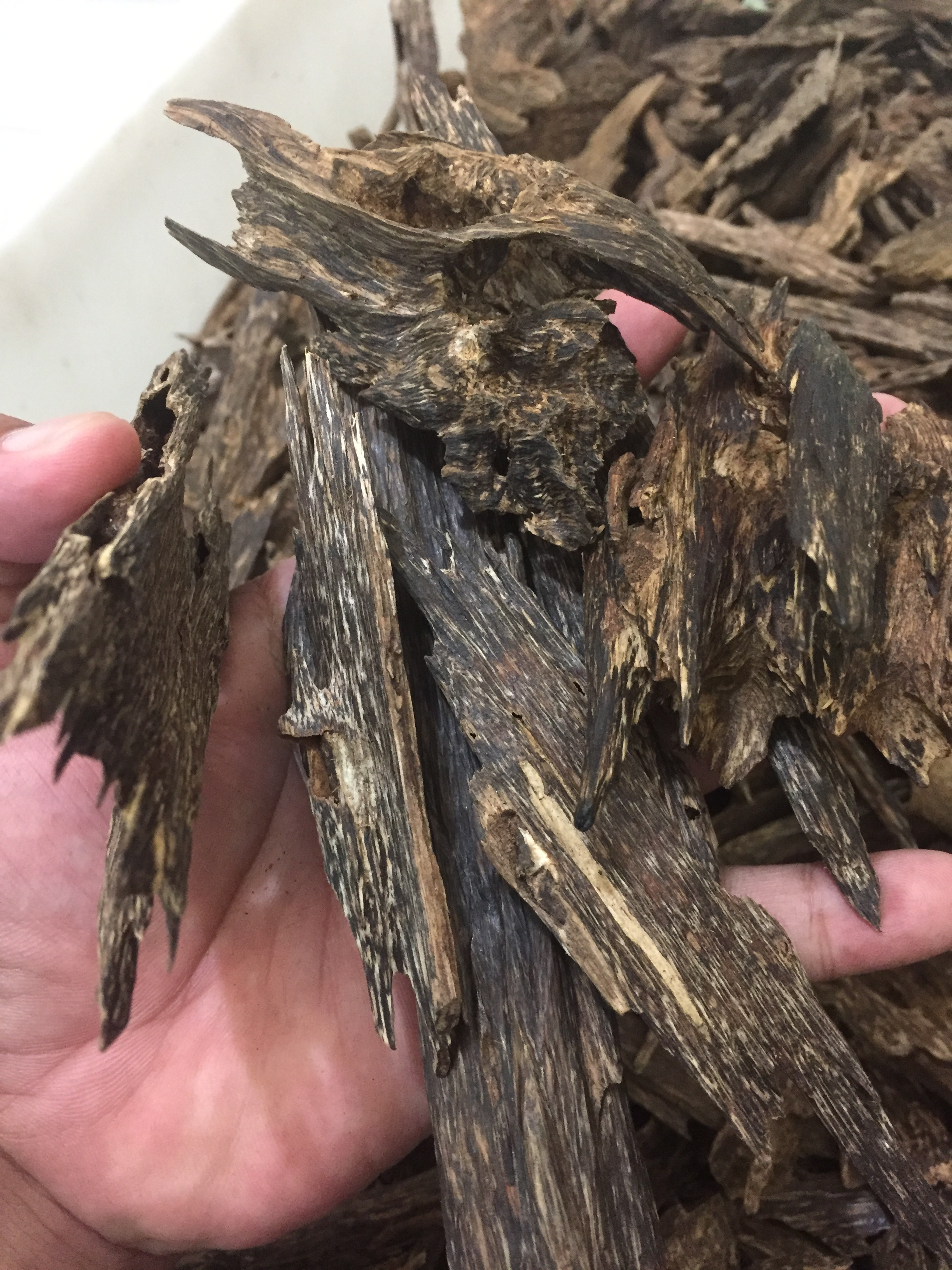 Agarwood chips or oud chips
