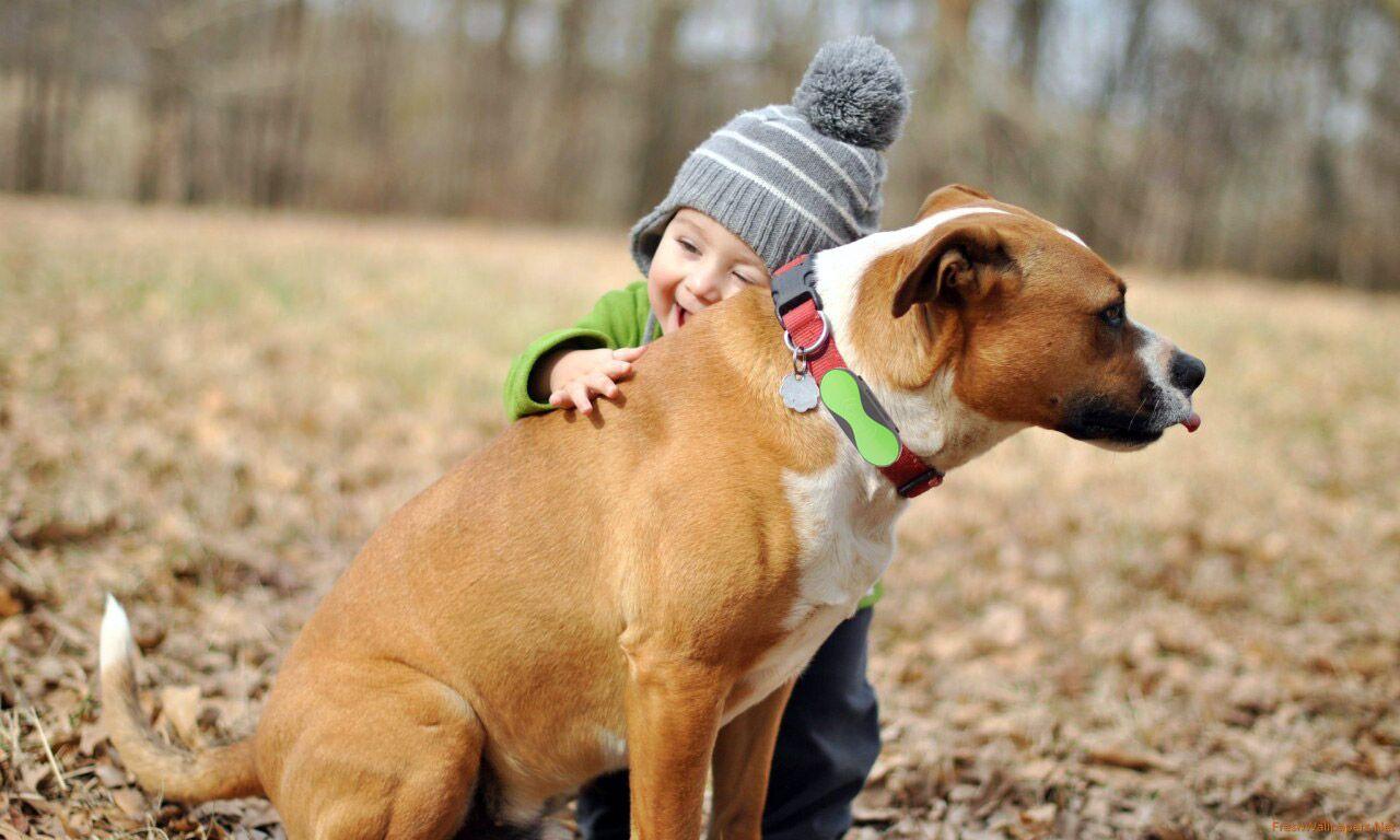 Pet tracker_3