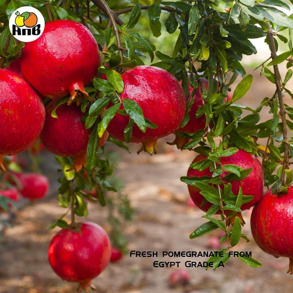 Fresh pomegranate_3