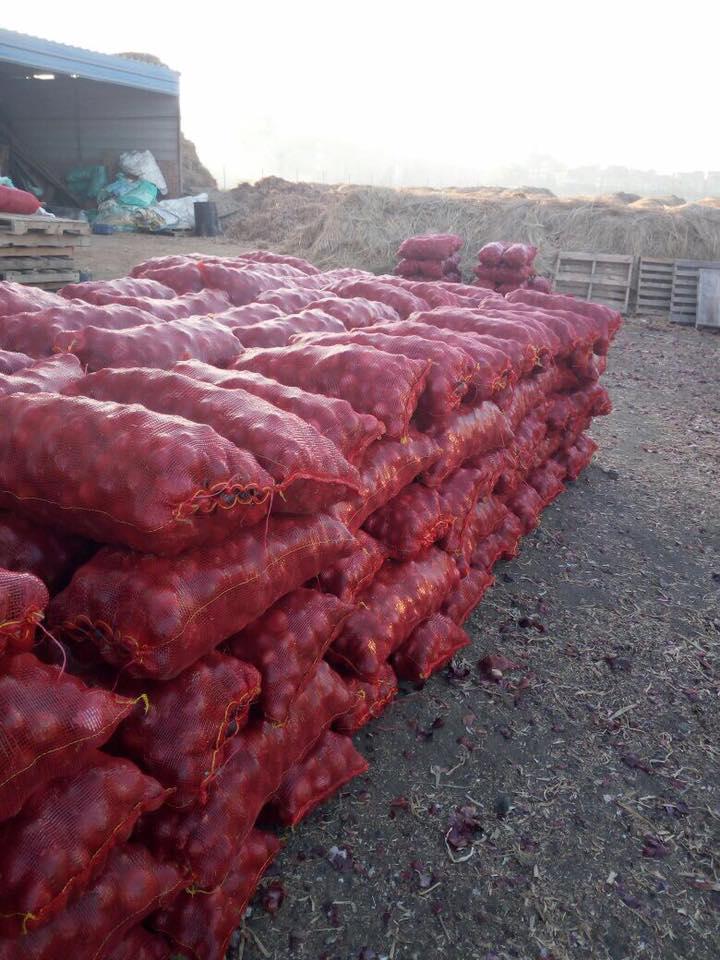 Fresh red onion_3