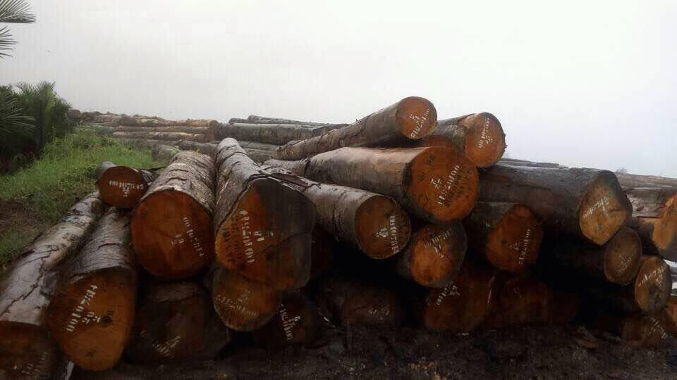 Timber Wood Logs  lumber for sale_2