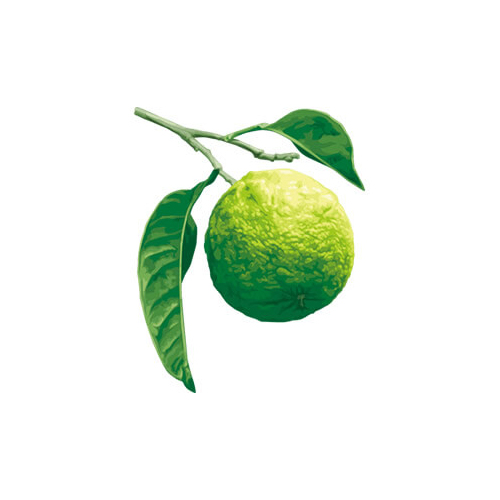 Essential oils - bergamot