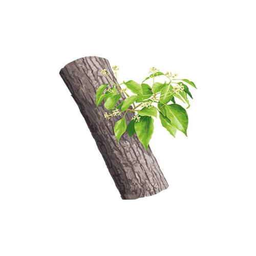 Essential oils - ho wood