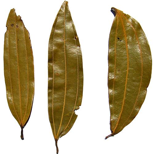 Bay Leaf (Tejpatta)_2