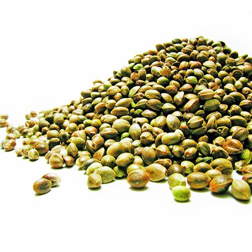 Hemp seeds_2