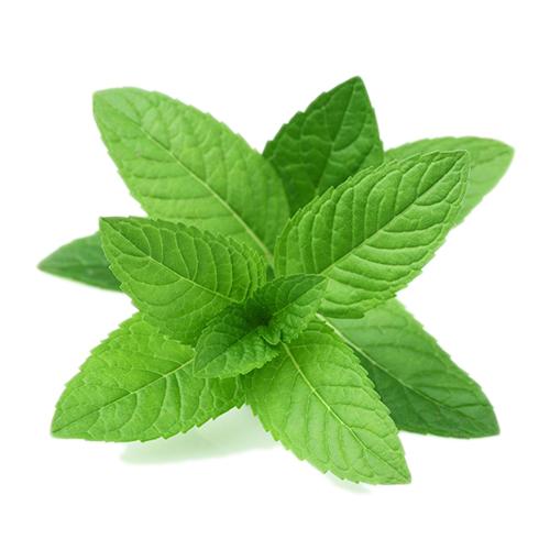 Herbs/mint