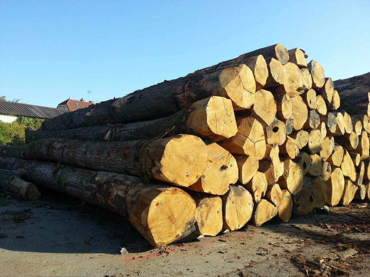 Logs-white oak